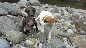 Cute Dominica Dogs